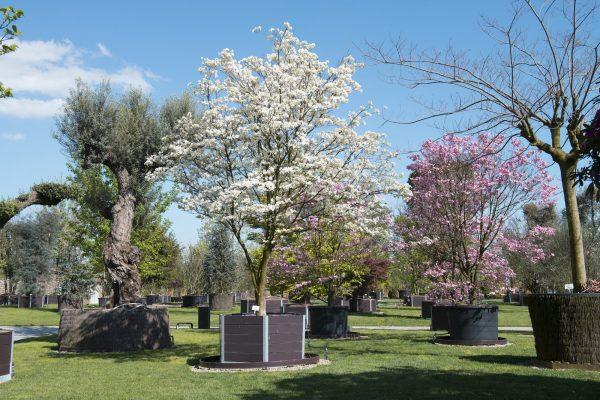 Parco_cornus_fioriture_aprile_2016_(43_di_60)